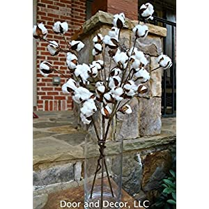 Rustic Cotton Stems with 15 to 18 Cotton Bolls per Stem and 30-32 inches Tall Farmhouse Style 52