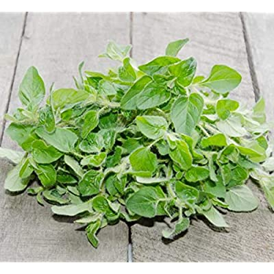 Italian Oregano, Herbs, 2500+ Premium Heirloom Seeds, Absolutely Fantastic Addition to Your Home herb Garden! (Isla's Garden Seeds), Non GMO, 85% Germination Rates, Highest Quality Seeds : Garden & Outdoor