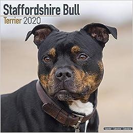 Best Dog Collars 2020 Staffordshire Bull Terrier Calendar   Dog Breed Calendars   2019