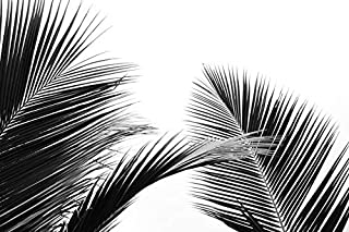 product image for Palm Leaves - Black & White A-9012030 (24x36 Giclee Gallery Print, Wall Decor Travel Poster)