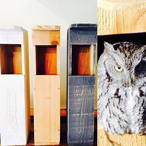 Screech Owl Bird House Box Handmade