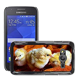 Hot Style Cell Phone PC Hard Case Cover // M00110482 Chicks Animal Fluffy Poultry // Samsung Galaxy Ace4 / Galaxy Ace 4 LTE / SM-G313F