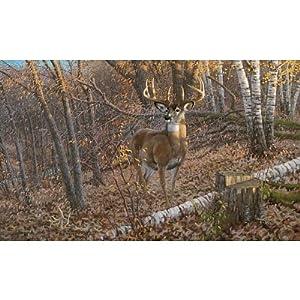 Amazon Com 99x164 Great Eight Big Buck Deer Huge Wall Mural Home Amp Kitchen