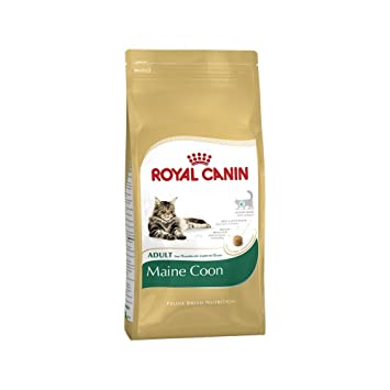 Royal canin maine coon amazon