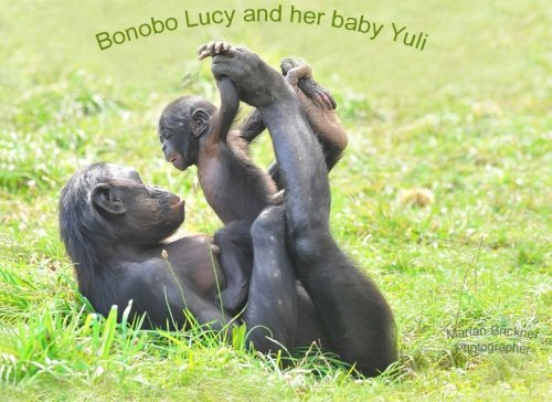 Download Bonobo Lucy and her baby Yuli ebook