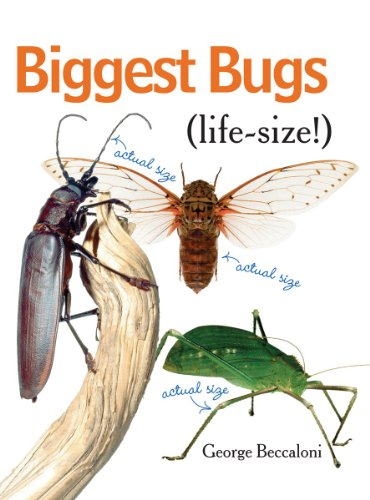 Biggest Bugs Life-Size for sale  Delivered anywhere in USA