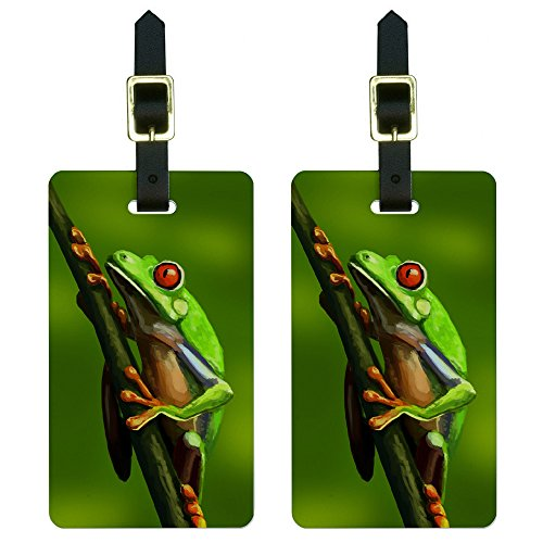 Green Red Eyed Tree Frog