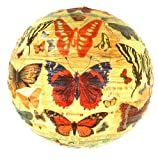 Paper Lantern - History of the Butterfly by Blue Q