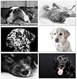 Dog Greeting Cards - Blank on the Inside - Includes Cards and Envelopes - 6 Unique Designs - 5.5''x4.25'' (24 Pack)