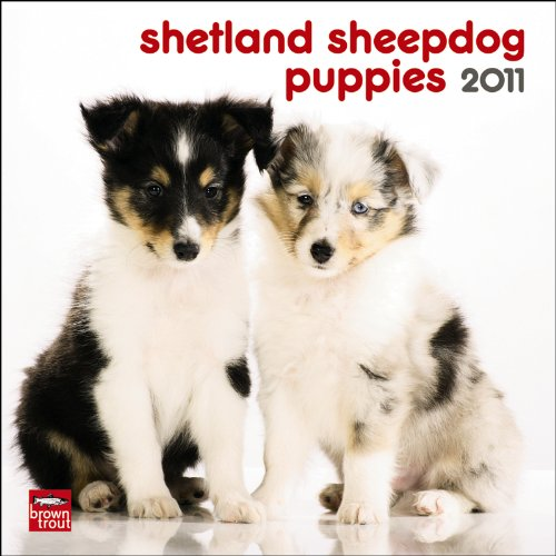 Sheepdog 2011 Calendar - Shetland Sheepdog Puppies 2011 Mini 7X7 Wall