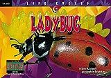 Ladybug, David M. Schwartz, 1574715534