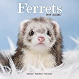 Ferret Calendar - Cute Animals Wall Calendar - Calendars 2017 - 2018 Wall Calendars - Ferrets 16 Month Wall Calendar by Avonside