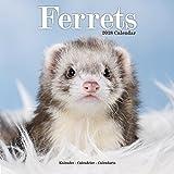 Ferret Calendar - Cute Animals Wall Calendar - Calendars 2017-2018 Wall Calendars - Ferrets 16 Month Wall Calendar by Avonside