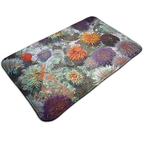 (PTYHR Non Slip Memory Foam Tub-Shower Bath Rug Set, Colourful Sea Urchins Cover The Rocks Soft Cozy, Drying Fast, Large Size 20 X 32 Inches)