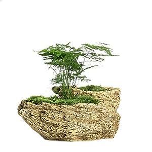 NCYP Resin Artificial Twisted Driftwood Flower Pot Sculpture Succulent Planter 2 Pots Rustic Trunk Stump for Decoration No Plants