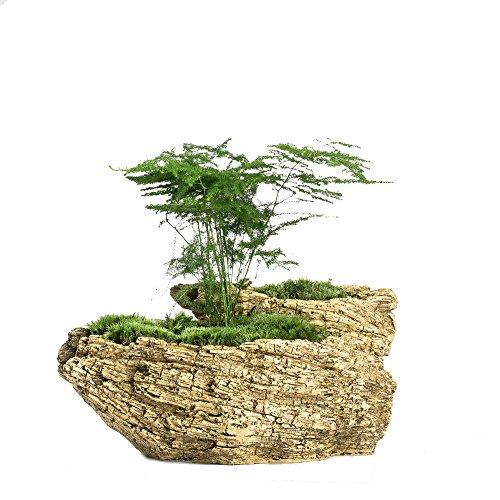 Driftwood Stump - 8