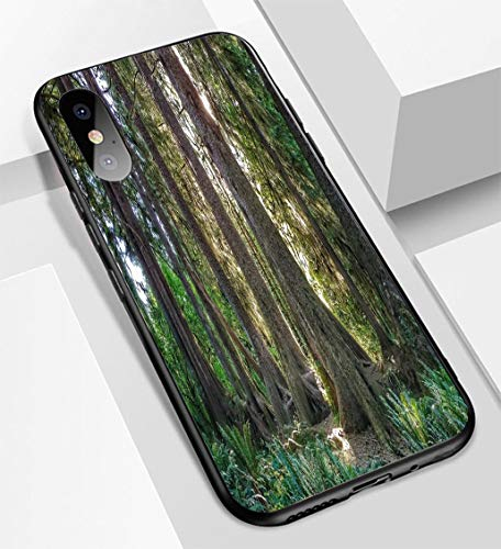 - iPhone X/XS Ultra-Thin Glass Back Phone case,HOH Rainforest Olympic National Park Washington Sitka Hemlock Nursing Log Soft and Easy to Protect The Protective case