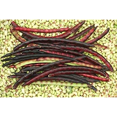 Mississippi Pinkeye 2 Purple Hull Cowpea Seed - Southern Peas Seeds (0.25 OZ - 1 LB) 1 oz : Garden & Outdoor