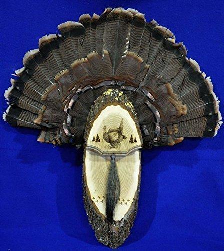 (Turkey Fan Plaque Turkey Mounting Kit Turkey Hunting Turkey Fan and Beard Mount Turkey Fan Mount And Display Kit One Of A Kind Turkey Fan Mount)
