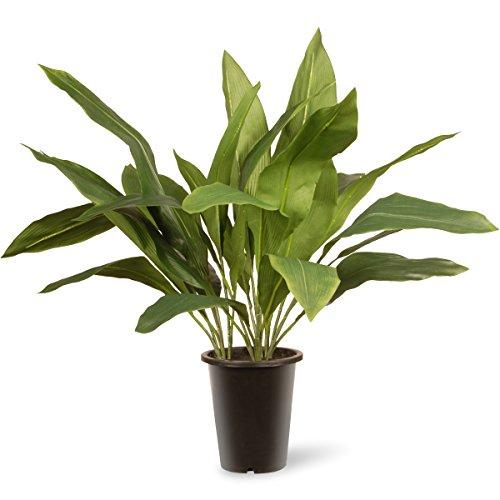 UPC 729083474002, National Tree 30 Inch Garden Accents Green Aspidistra Plant in Black Pot (GAAP30-30G)