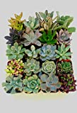 20 Succulent Favors/Small Succulents Plants in Pots/Perfect Wedding Favors th...