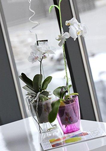 Blument/öpfe Premium Qualit/ät Orchidee transparent Topf Blumenk/übel MultiProject 2 Gr/ö/ßen 6 Farben /Ø 13 cm, H 16 cm, Gelb Pflanzk/übel HappyFlower Blumentopf am besten f/ür Orchideen