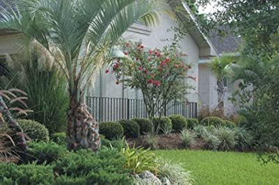 Gardening and Landscaping in Central Florida