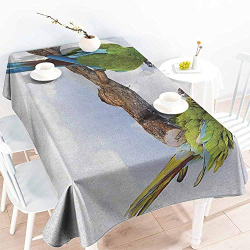 - EwaskyOnline Water Resistant Table Cloth,Parrot Two Parrot Macaw on a Branch Talking Birds Clever Creatures of The Nature,Party Decorations Table Cover Cloth,W60X90L, Green White Brown