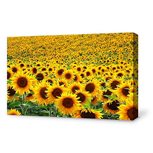 SIGNFORD Canvas Wall Art for Living Room,Bedroom Home Artwork Paintings Sunflower Ready to Hangv – 16×24 inches
