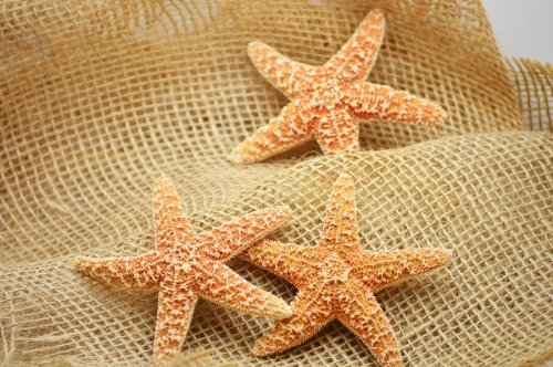 (9GreenBox - 3 Sugar Starfish)