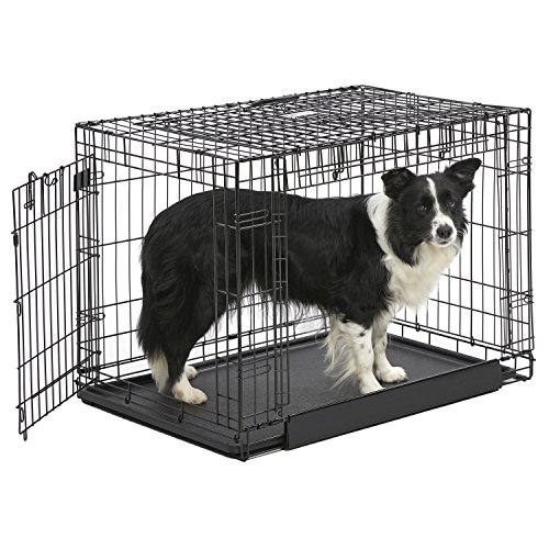 MidWest Homes for Pets Ovation Double Door Dog Crate, 36-Inch (Midwest Icrate Double Door Folding Dog Crate)