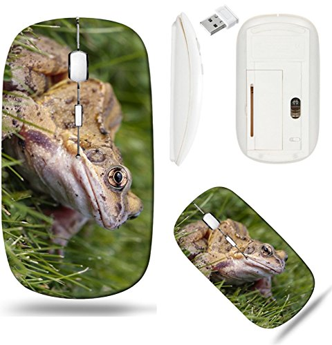 (Liili Wireless Mouse White Base Travel 2.4G Wireless Mice with USB Receiver, Click with 1000 DPI for notebook, pc, laptop, computer, mac book IMAGE ID: 8093579 Common frog closeup on grass)