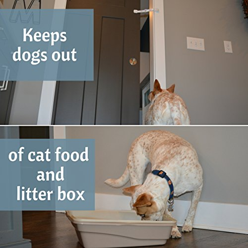 What To Add To Dog Food To Stop Eating Poop