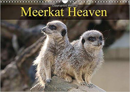 Meerkat Heaven 2018: Meerkats Basking in the Morning Sunshine (Calvendo Animals)