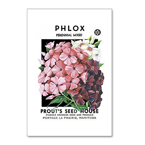CafePress - Phlox - Postcards (Package of 8), 6