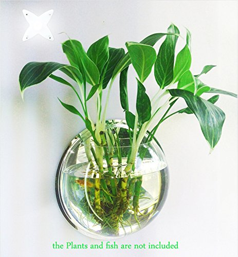 Plant Wall Hanging Fish Bubble – Wall Mounted Acrylic Fish Bowl Home Decoration(2-pack)