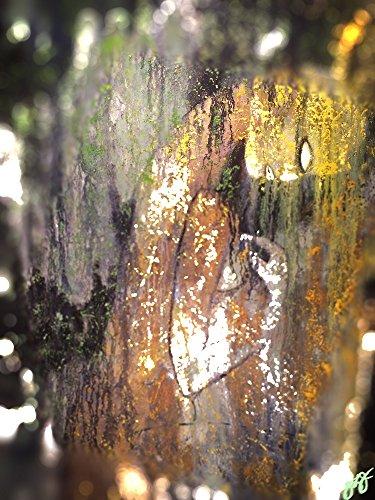 Juno Canvas (juno.)