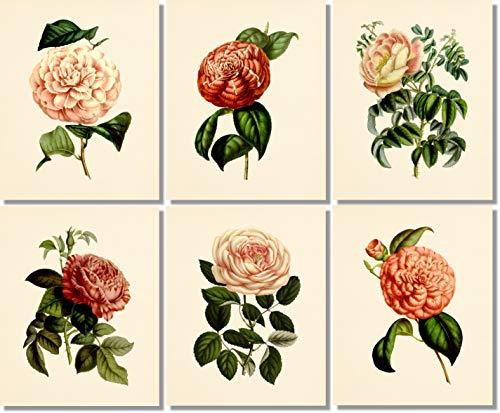 Print Deco Floral - Flower Wall Art - Botanical Prints (Set of 6) - 8x10 - Unframed - Vintage Floral Decor