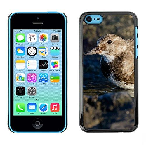 Premio Sottile Slim Cassa Custodia Case Cover Shell // F00014084 oiseau // Apple iPhone 5C