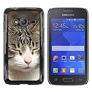 Be Good Phone Accessory // Dura Cáscara cubierta Protectora Caso Carcasa Funda de Protección para Samsung Galaxy Ace 4 G313 SM-G313F // American Shorthair British House Cat