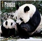 Pandas 2015 Square 12x12