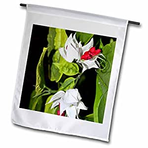 WhiteOak Photography Floral Prints - White flower with red center - 18 x 27 inch Garden Flag (fl_51791_2)