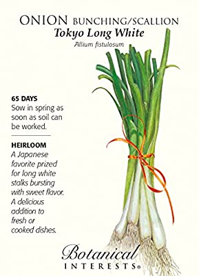 Onion Bunching / Scallion Tokyo Long White Seed