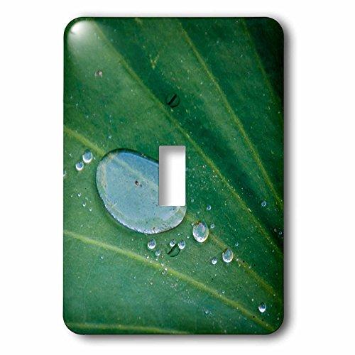Danita Delimont - Leaves - California, Santa Barbara, Summer Solstice Reception, lotus leaf - Light Switch Covers - single toggle switch - Barbara Santa Solstice