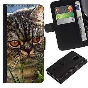 eJoy---La carpeta del tirón la caja de cuero de alta calidad de la PU Caso protector - Samsung Galaxy S5 Mini, SM-G800 - --Yellow Eyes Cat Mongrel Grey Angry