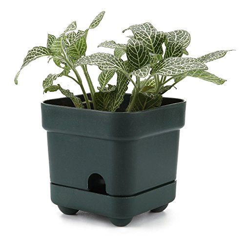 T4U 4.5 Inch Plastic Self Watering Square succulent Plant Pot/Cactus Plant Pot Flower Pot/Container/Planter Small Size Dark green (Plastic Pots Small compare prices)