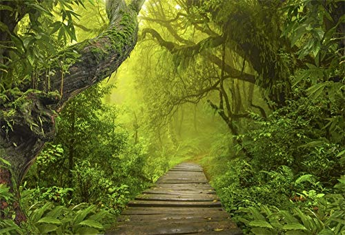 Baocicco 10x6.5ft Spring Natural Landscape Backdrop Enchanted Forest Backdrop Boardwalk Gloomy Green Trees Photography Background Trip Adventure Leisure Baby Children Adults Portrait Studio Prop