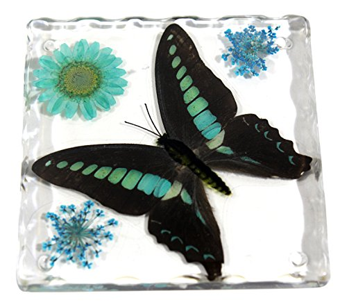 REALBUG Resin Coaster with Common Blue Bottle Butterfly (Butterfly In Resin compare prices)