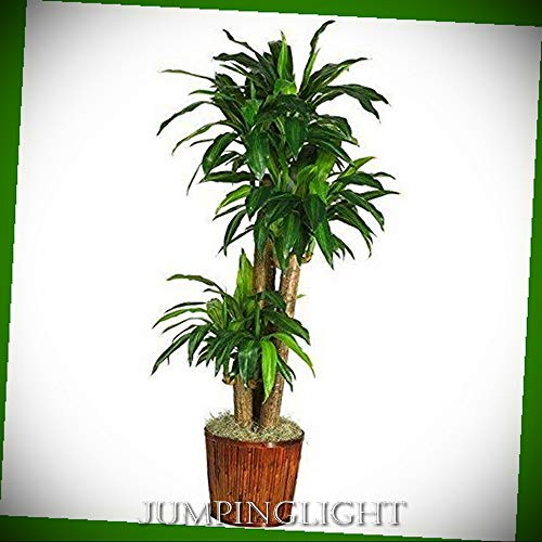 JumpingLight 62'' Dracena with Basket Silk Plant (Real Touch) Artificial Flowers Wedding Party Centerpieces Arrangements Bouquets Supplies