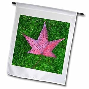 Danita Delimont - Flora - USA, WA, Sweet Gum flora on Moss - US48 RTI0185 - Rob Tilley - 12 x 18 inch Garden Flag (fl_96760_1)